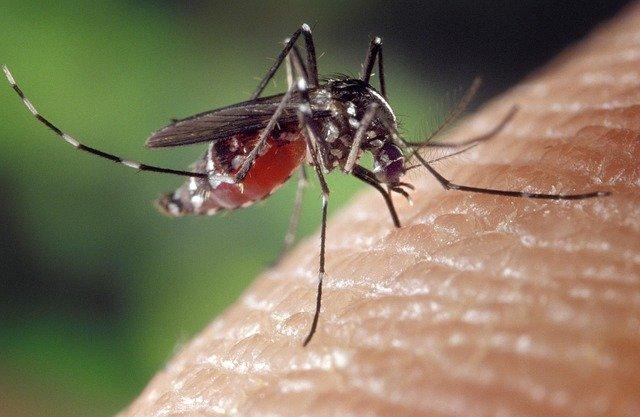 ustipnutie komarom